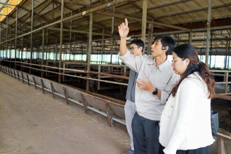 Cùng Joy Plus trải nghiệm trang trại bò Kobe made in Viet Nam